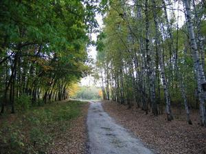 Дендрарий в Дзержинске Нижегородской области