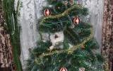 Кошка Вася (Алла - 1149211211)